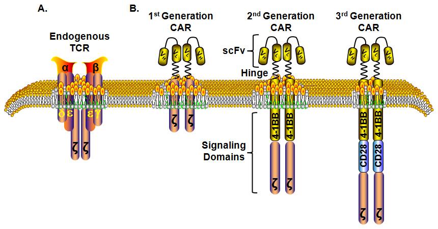 for tumor antigens  V Antigen