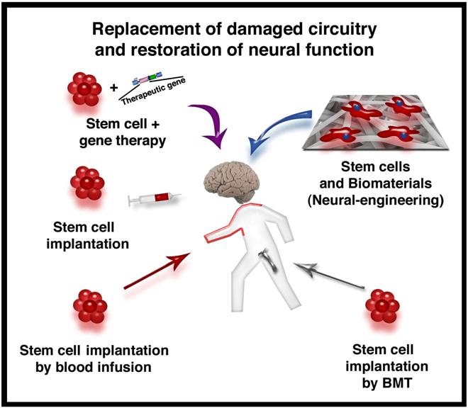 Stem Cells and Neurological Diseases - Antonio Orlacchio