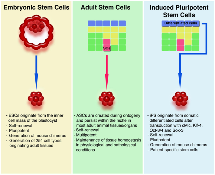 History and Ethics of Stem Cell Research