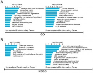 Expression Profiling and Functional Prediction of Long Noncoding