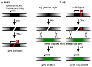 gene augmentation therapy