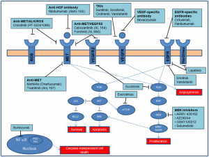 Figure 2. Key signaling pathways and inhibitors in advanced biliary tract cancers.