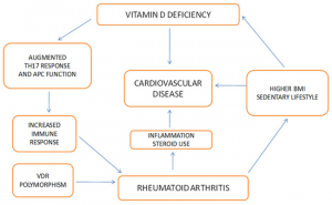 Figure 1. Vitamin D and rheumatoid arthritis.