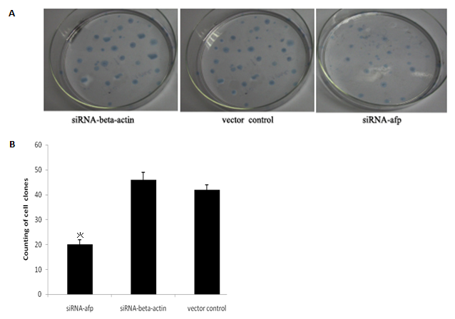 Effects of AFP Gene Silencing on Apoptosis and Proliferation