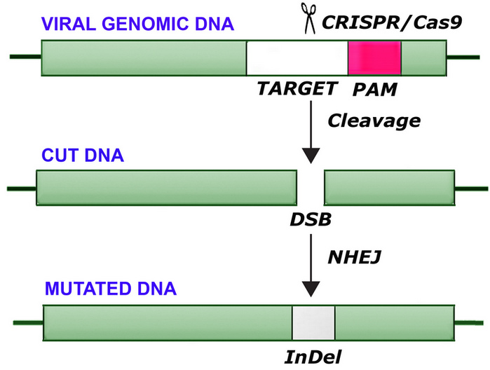 The CRISPR/Cas9 Genome Editing Methodology as a Weapon