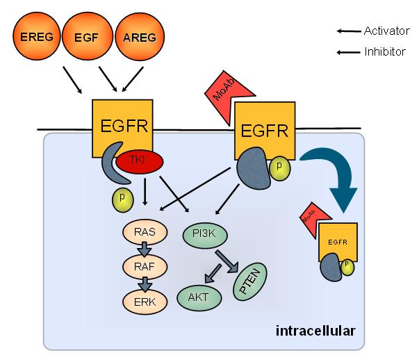 tyrosine kinase inhibitors 2011