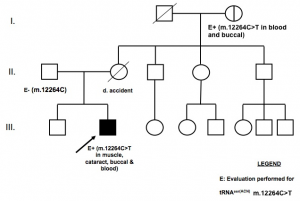 "Figure 1. Pedigree of proband with multisystem mitochondrial disease and cataracts. Arrow indicates proband.  ""E"" indicates individuals in whom molecular evaluation was performed for the tRNASer(AGY) m.12264C>T mutation. No tissue was available for testing from the proband's mother. The heteroplasmy load of various tissues of the proband, his father, and his maternal grandmother are detailed in Table 1."