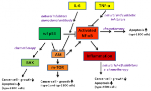 Figure 1. Schematic signaling of key inflammation associated proteins in EOC cells. The protein targets are modulated by chemotherapeutic drugs or/and natural inhibitors, which exhibit anti-proliferative activity and induce apoptosis in type-1 or type-2 cells.