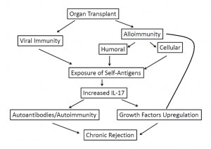 Figure 1. Proposed mechanism for chronic rejection.