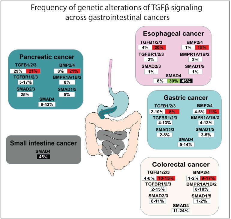Tgf Beta Signaling And Its Targeted Therapy In Gastrointestinal Cancers Jovana R Gotovac Discovery Medicine